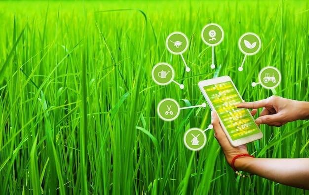 高品質な製品のためのスマートフォンaiアプリケーションを使用した農産物の制御。
