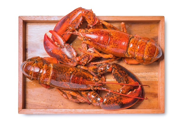 Cooked and boiled red lobster isolated on a white background,fresh boiled crayfish on white isolated background