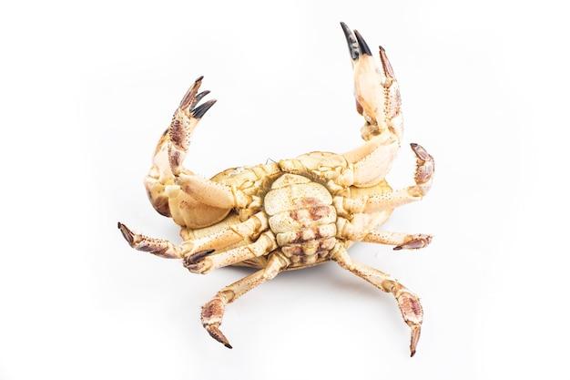 調理された茶色のカニまたは白い背景で分離された食用のカニ。