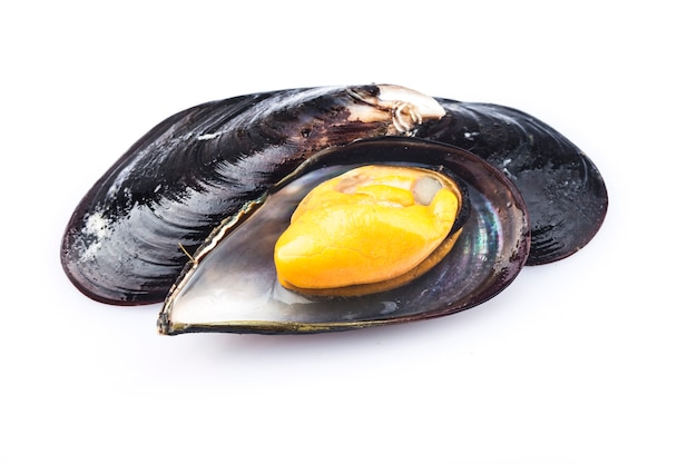 Cooked mussels are isolated on a white background.