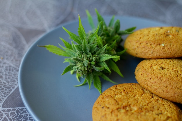 Cookies with cannabis and buds of marijuana on the plate. can of cannabis buds cbd. medical legal marijuana.