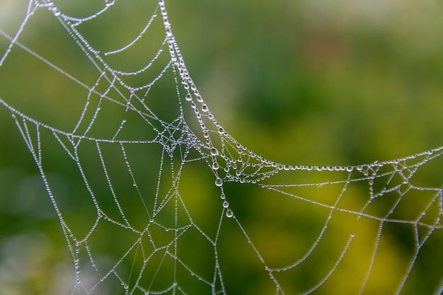 이슬이 맺힌 거미줄의 멋진 아름다운 사진은 일출 동안 이른 아침 시간에 떨어집니다. 물 방울과 거미줄입니다.