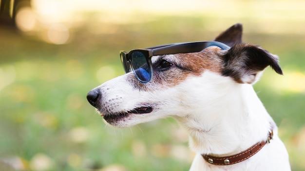 Cool dog wearing sunglasses
