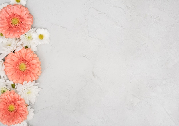 Copy space background with daisies and gerbera flowers