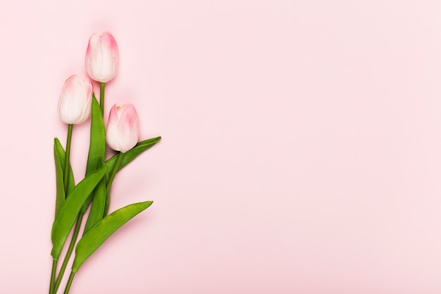 Copy-space blooming tulips on pink background