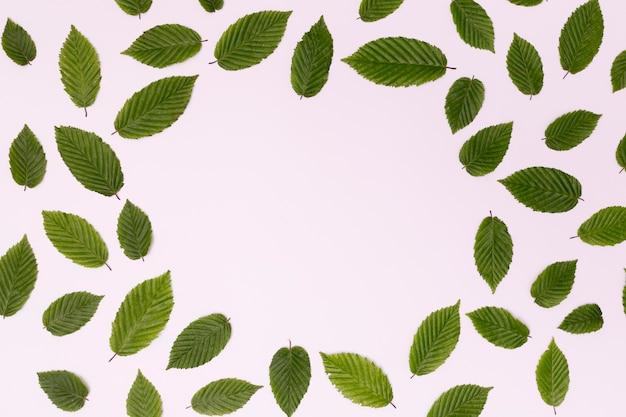 Copy space circle arrangement of leaves