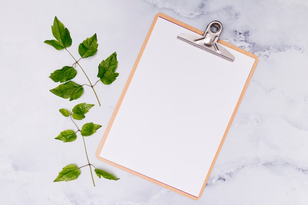 Copy space clipboard with common ash leaves