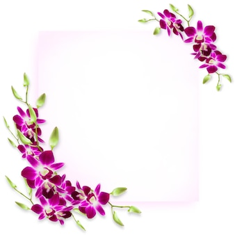 Copy space decorate with sweet colorful tropical orchids flower frame.