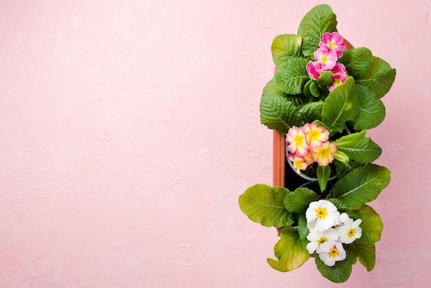 Copy-space цветочные горшки на столе