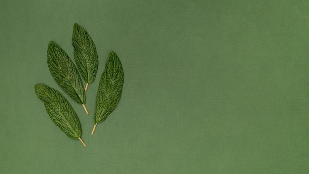 Copy space green background leaves