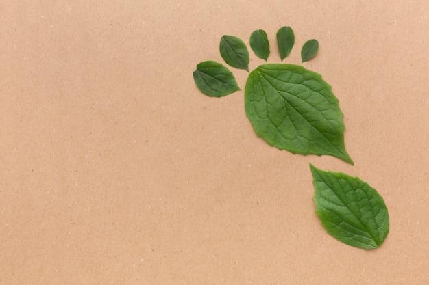 Raccolta di foglie copia-spazio