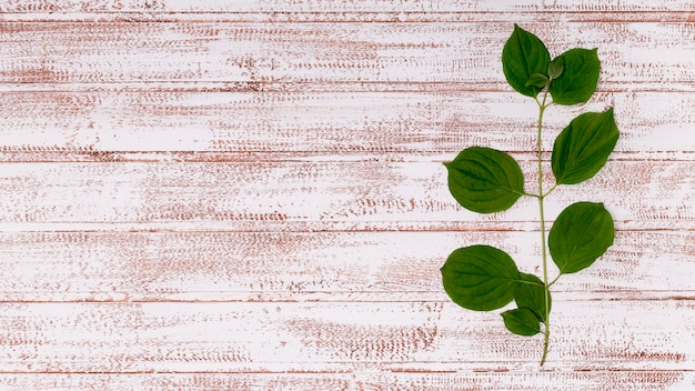 Copy space leaves on wooden background