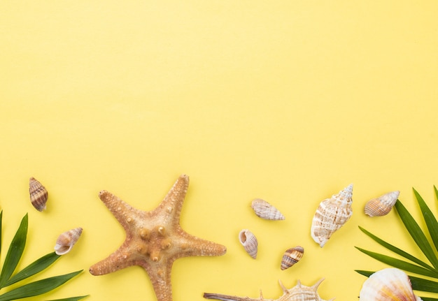 Copia-spazio di molluschi e stelle marine