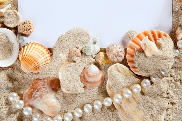 Copy space summer sand beach shells pearl blank