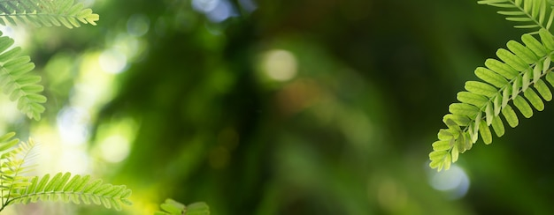 Copy space with closeup nature view of green leaf frame on blurred greenery background