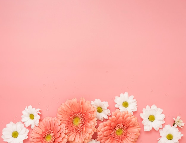 Copy space with daisies and gerbera flowers