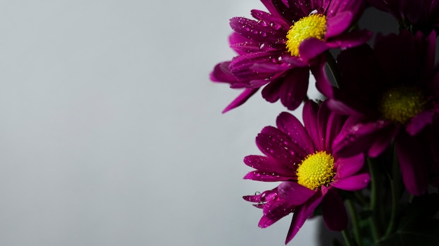 Copia-spazio con fiori di primavera