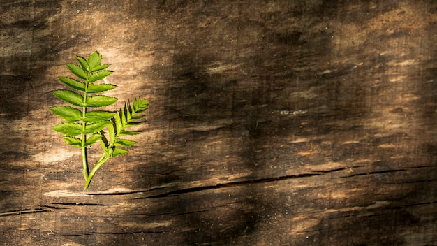 Copy space wooden background with fern leaves