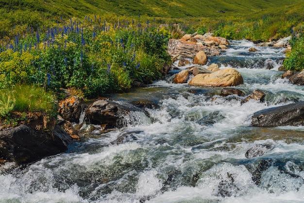 マウンテンクリークの近くの美しい青い花。速い水流のクローズアップで大きな岩。 copyspaceでラピッズ川。濡れた石の近くの速い流れ。きれいな波の。高地の豊かな植物。
