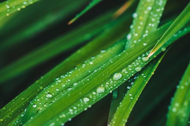 Красивая яркая сияющая зеленая трава с концом-вверх падений росы с copyspace. чистая, приятная, приятная зелень с каплями дождя на солнце в макро. предпосылка от зеленых текстурированных заводов в погоде дождя.
