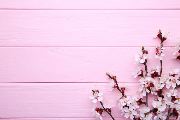Ветви весны зацветая на розовой деревянной предпосылке с copyspace.
