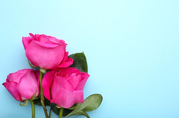 Три красивые розовые розы на синем copyspace