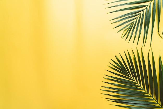 Copyspaceと黄色の背景に熱帯のヤシの葉