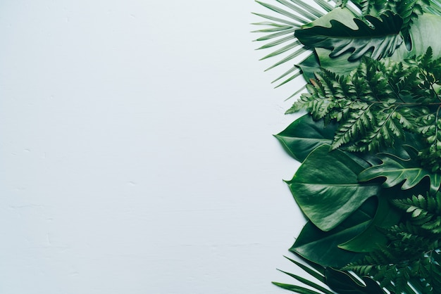 Copyspaceと色の背景上の熱帯のヤシの葉