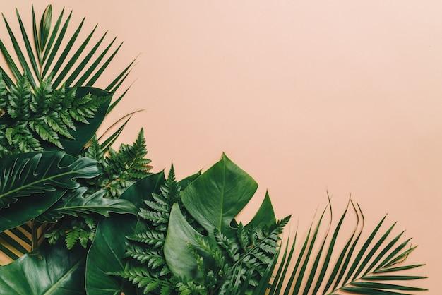 Тропические пальмовые листья с фоном copyspace