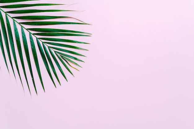 Copyspaceの背景を持つ熱帯のヤシの葉