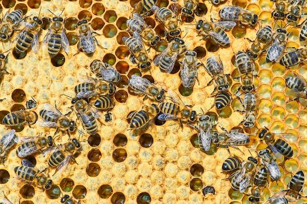 Copyspaceとハニカムの蜂の巣のマクロ写真。ミツバチは新鮮で健康的な蜂蜜を生産します。