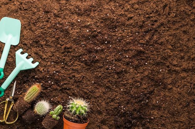 Плоская планировка кактусов и садовых инструментов с copyspace