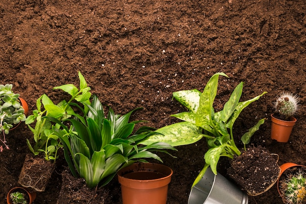 Плоская планировка растений и садовых инструментов с copyspace