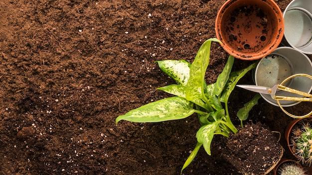 フラットレイアウトのcopyspaceと植物と園芸工具