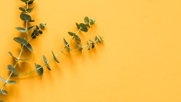 Плоская планировка листьев с copyspace