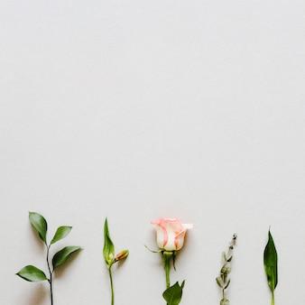 Вид сверху линия растений с copyspace