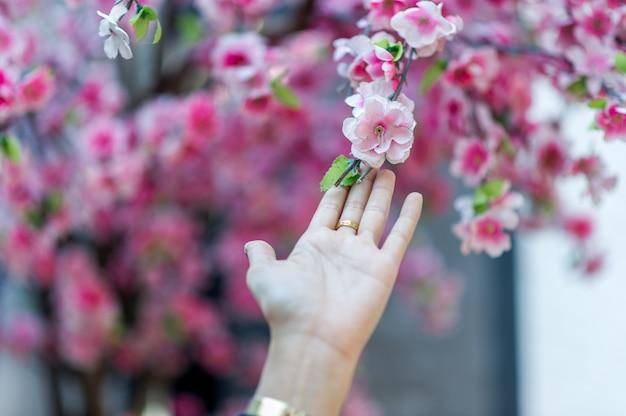 手と美しいピンクの桜自然の旅のアイデアcopyspace
