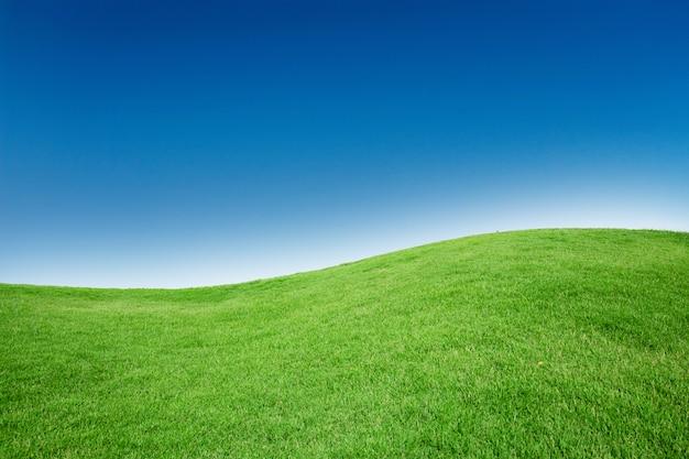 Текстура зеленой травы с бланга copyspace против голубого неба