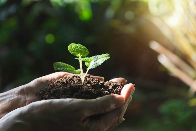 Copyspaceと緑の小さな植物を保持している人間の手。生活と生態学。