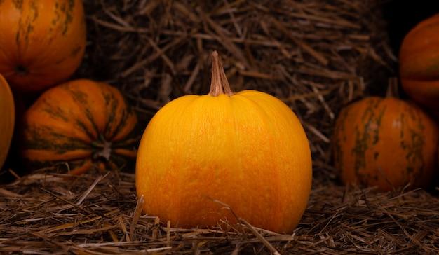 干し草に大きなオレンジ色の新鮮なカボチャ。 copyspaceでの感謝祭