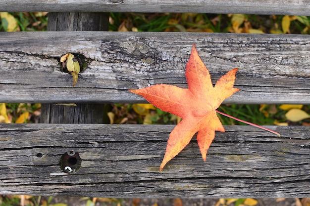 孤独秋秋ベンチカエデの葉copyspace孤独うつ病新しいスタート先延ばし