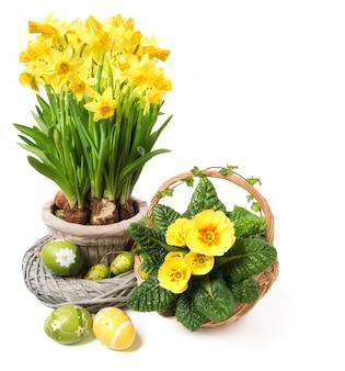 黄色の水仙とプリムローズホワイト、テキストcopyspace