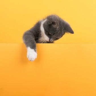 Милый маленький серый котик, на желтом, смотрит и играет. бизнес, copyspace.