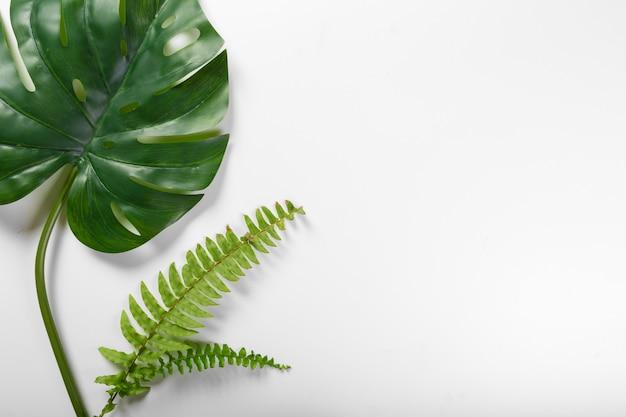 Copyspaceと白い背景の上の別の熱帯の葉