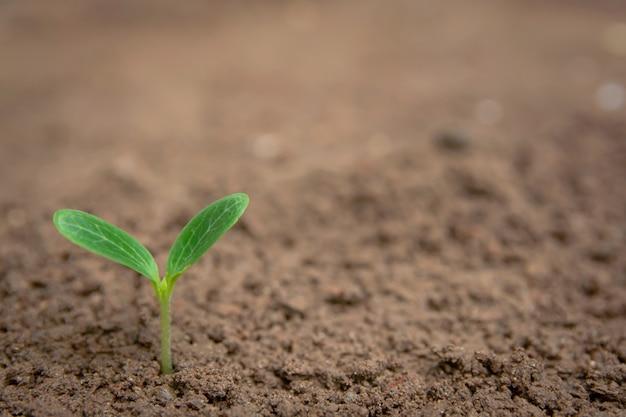 Copyspaceと土壌の背景から成長している緑の芽