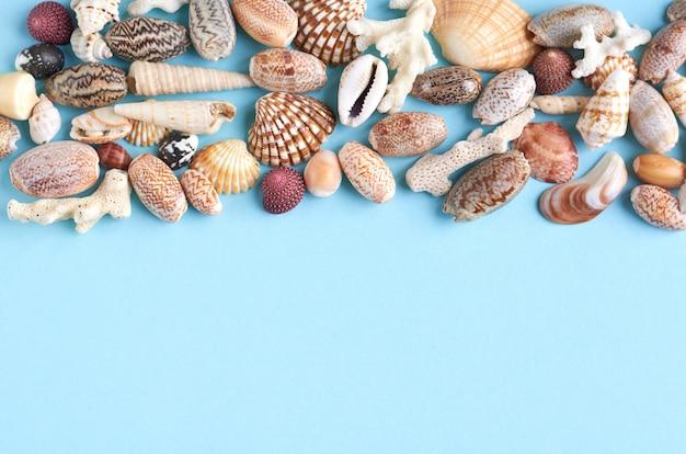 夏休み構図のアイデア、copyspaceと青の背景に貝殻