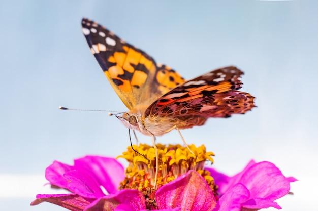空を背景の花にオレンジ色の蝶ごぼう。明るいマクロ写真。夏のコンセプト、ミニマリズム、copyspace。