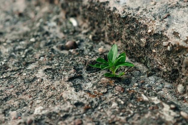 Маленький зеленый росток пробивается сквозь бетон. борьба, противостояние. крупный план. copyspace.