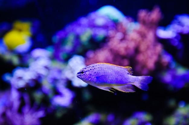 Кораллы и морские рыбы