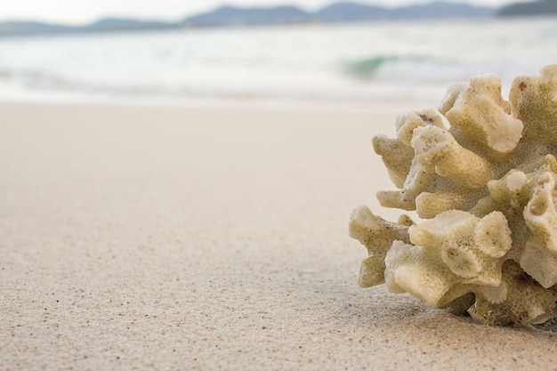 ビーチの背景にサンゴ礁。